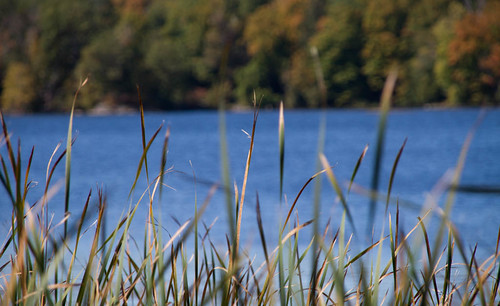 autumn trees lake ontario canada fall water leaves canon reeds portland bullrushes cameraraw sigma18200 canon7d rideaucanalsystem lightroom4 lightroom4processing