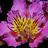 the fiori colorati group icon