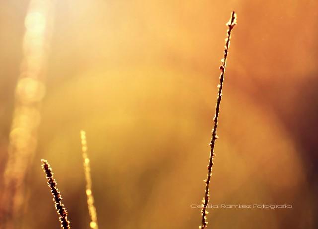 La luz del viento...