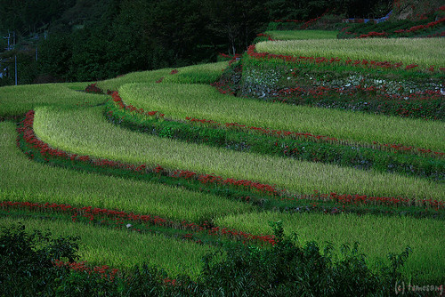 Bansho Rice Terrace