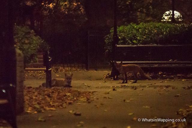 Wapping Fox ( x 2)