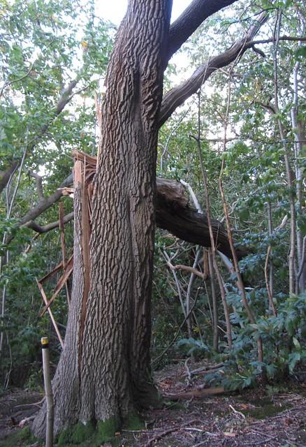 IMG_4463 St Jude storm damage 2013
