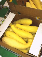 banana(0.0), fruit(0.0), vegetable(1.0), summer squash(1.0), yellow(1.0), produce(1.0), food(1.0),