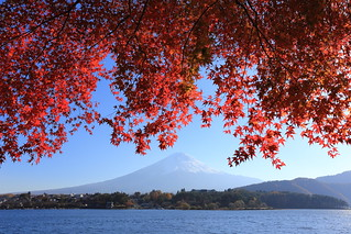Momiji and Mount Fuji