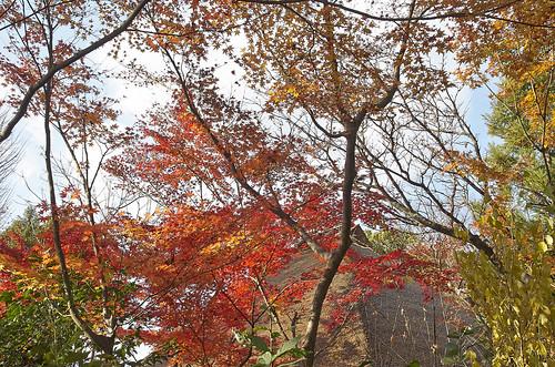 【写真】2013 紅葉 : 西行堂/2020-09-05/IMGP4748