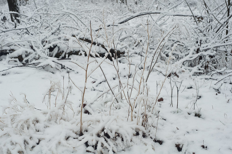 131210_snowwoodshp_034