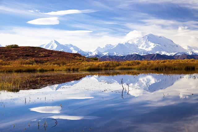 Critter Seeker - Mount McKinley Reflection