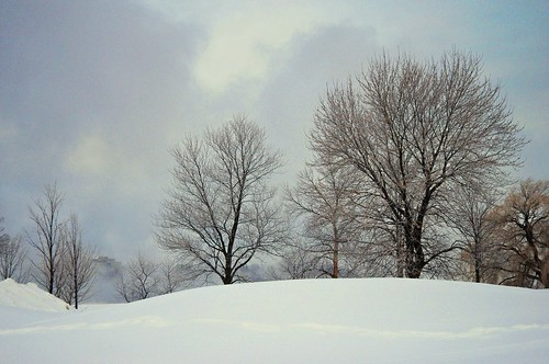 winter sun snow canada cold tree fog landscape cloudy ottawa hill pastures ontatio tunneys beyondhue