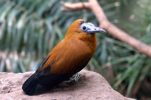 Dawn Chorus: Birding the Great Indoors (Part 2)