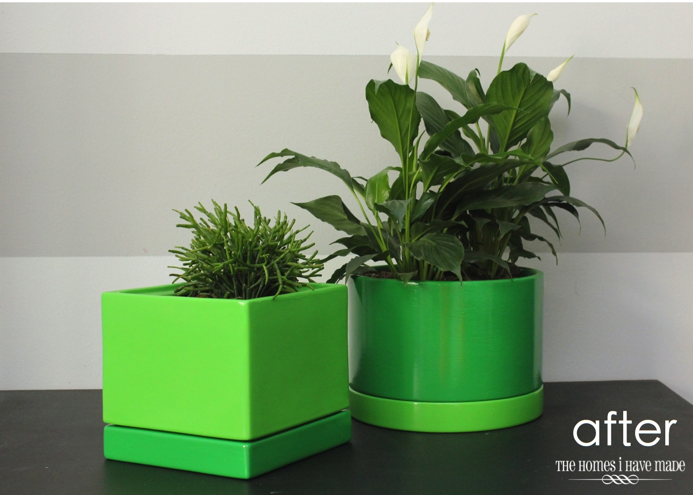 Green Planters-004