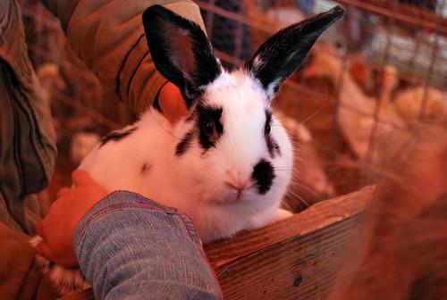 WPIR - bunny-001