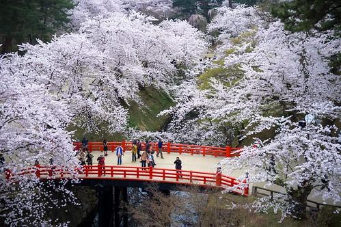 Sakura/hirosaki