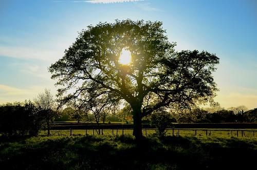 uk england nikon staffordshire midlands stafford 2014 haughton treesdiestandingup d7000