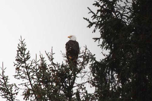 eagle1.15.15