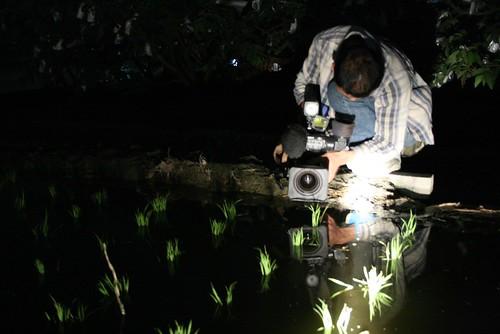 2006年起,我跟夥伴們一起進入美濃拍攝農村變遷。這一天是2007年年初的某夜,我們跟著農民到田裡放水,拍下了秧苗在晚上的姿態。圖片提供:李慧宜
