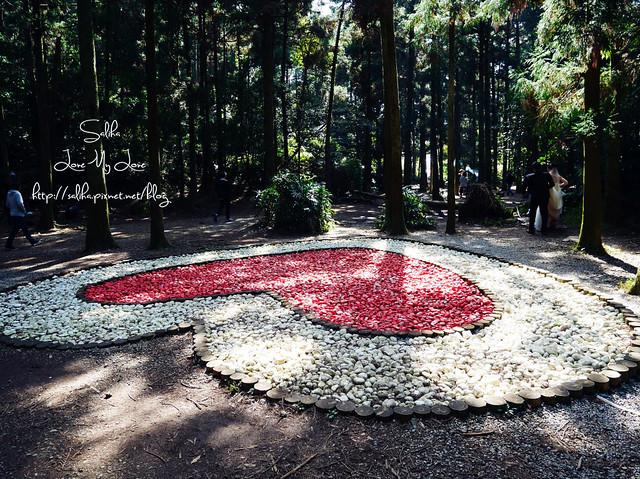 陽明山免費婚紗景點黑森林 (2)