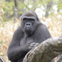 Zoológico do Bronx, NY,EUA At the Bronx's Zoo, NYC, USA