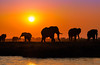 Silhouettes from Chobe, Chobe National Park, Botswana