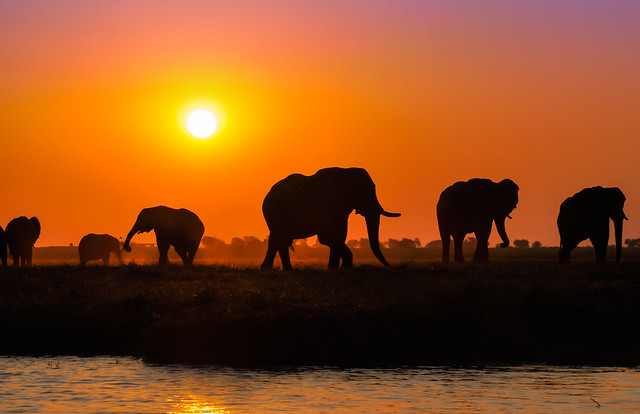 Silhouettes from Chobe, Chobe National Park, Botswana