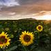 Puesta de 5 Soles / 5 suns set - Explored by ivgmarc