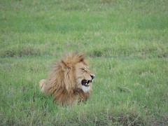 8721832284 f1140b7137 m The best vacation and best experience. Thomson Safaris Review: Ed & Karen B.