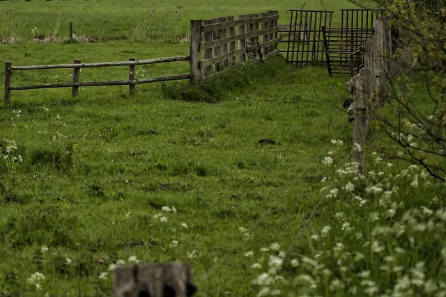 Fences in the Saturday morning rain