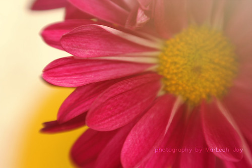 Sunny Pink Flower