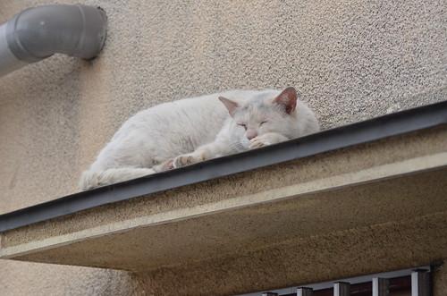 cats_2013-05-29_2