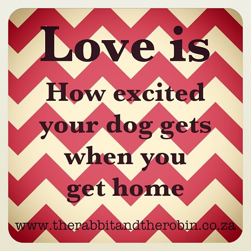 Love is how excited your dog gets when you get home. #dog #pet #love #quote #rabbitandrobin by rabbitandrobin