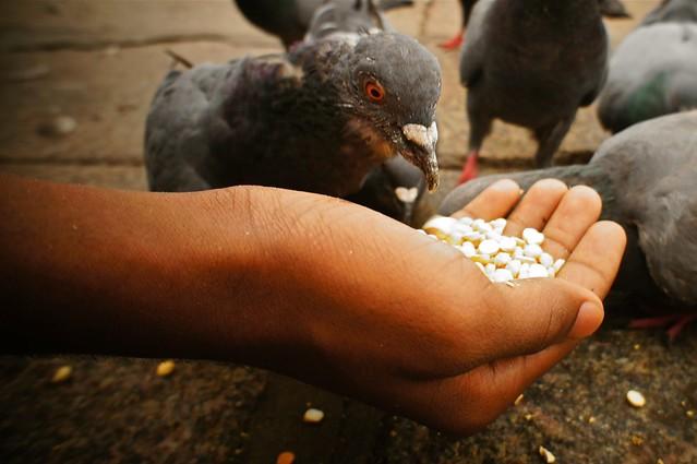 # 154 Feeding the Piegons
