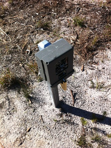 Reconyx camera trap, Bundjalung National Park