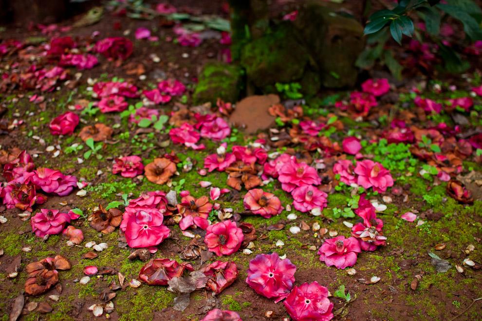 Flores de varios colores y el musgo verde se mezclan en el suelo dando a este patio una textura particular en el jardín de la casa de Don Agustín, a unos pocos kilómetros de Ita Verá. (Elton Núñez)