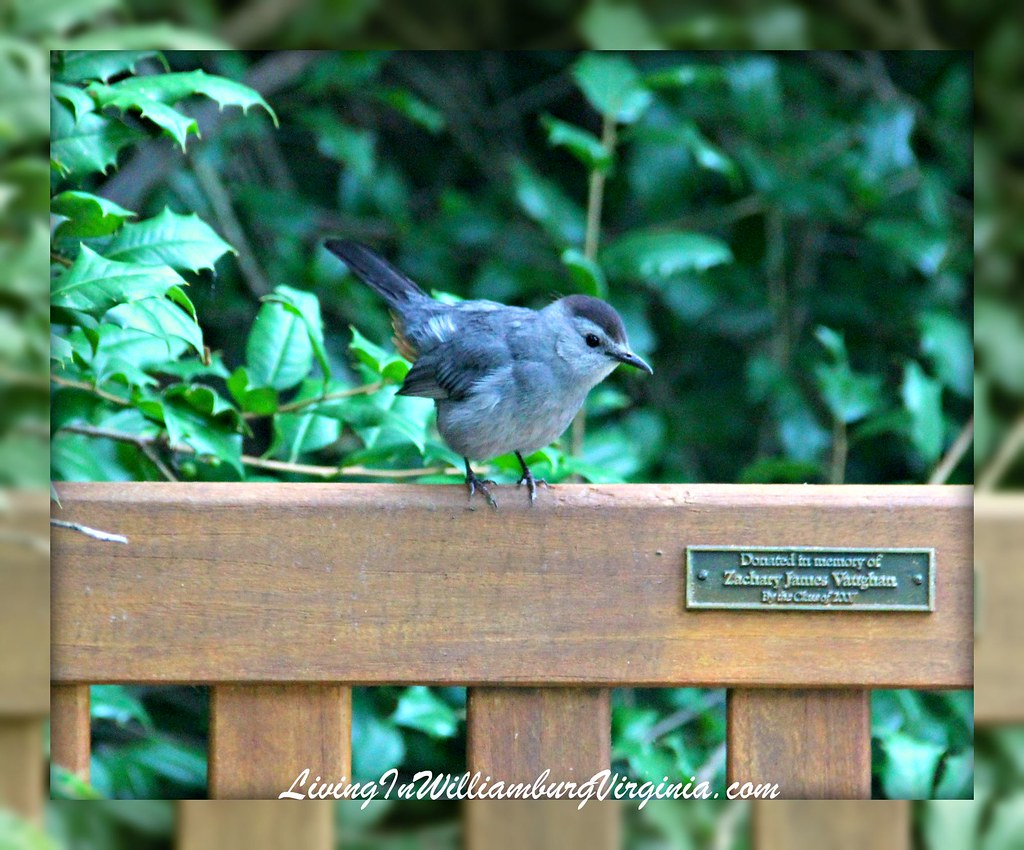 Bird On Bench at W&M