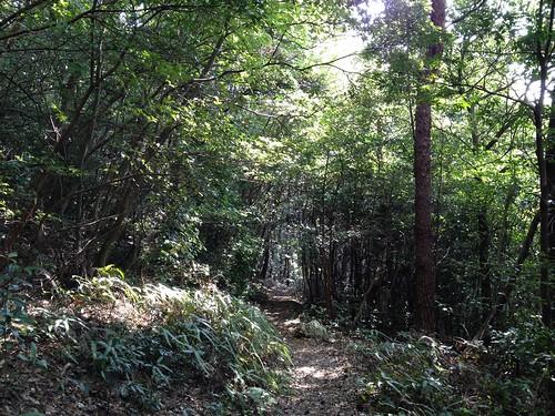 金華山 達目ハイキングコース