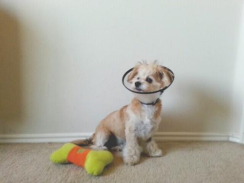Captain Knuckle's Surgery.