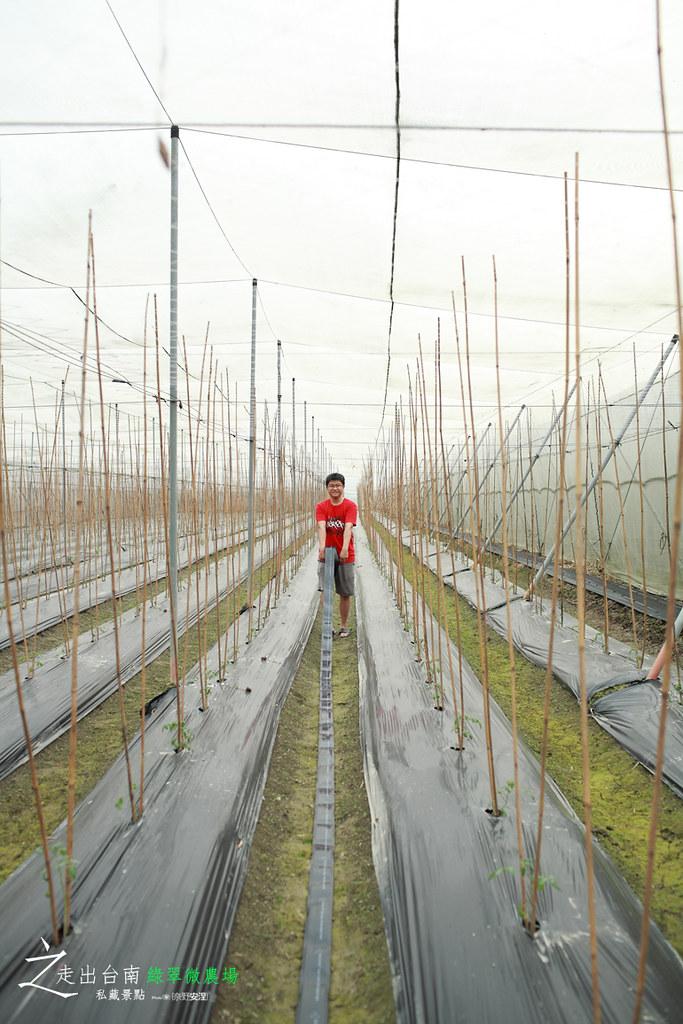 綠翠微農場 (3)