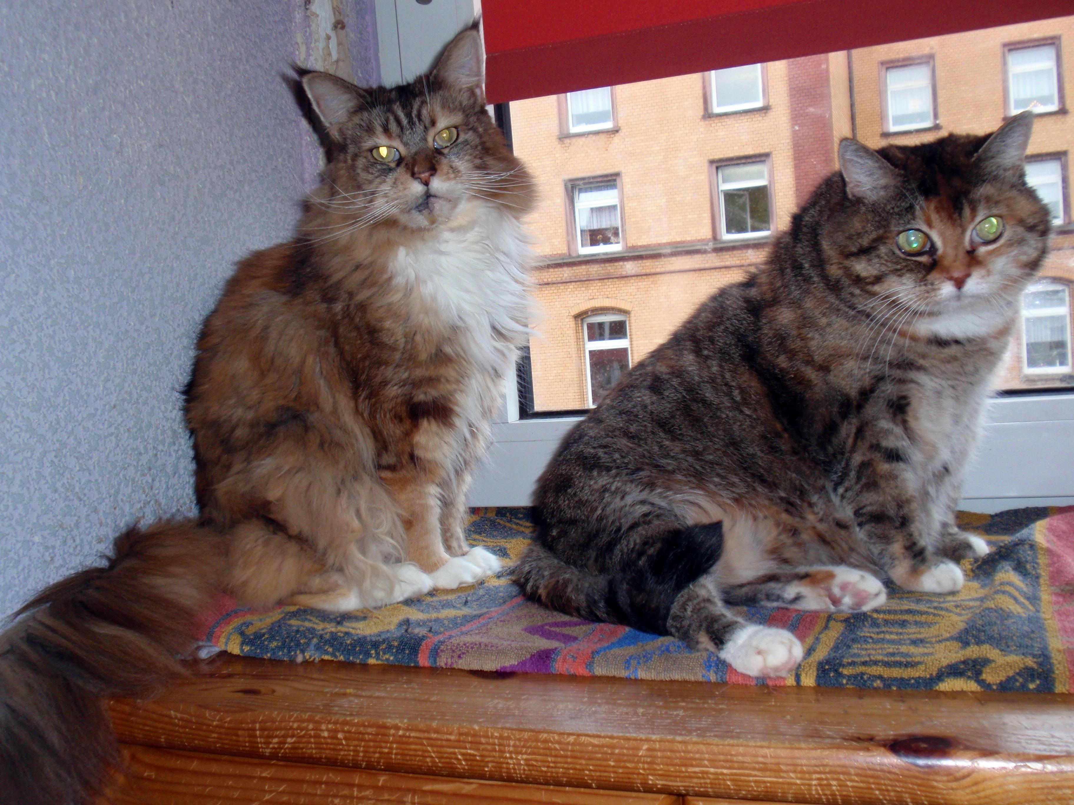 Die zwei Katzen Damen