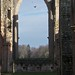 Is it Spring at Fountain Abbey. Feb 10th 2014