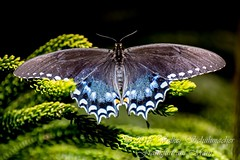 NYC_AMNH_Butterfly_5_web