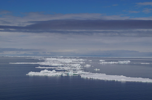 586 Weddell Sea met Adeliepinguin