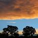 Twin Oaks Sunset. jpg by wcraig