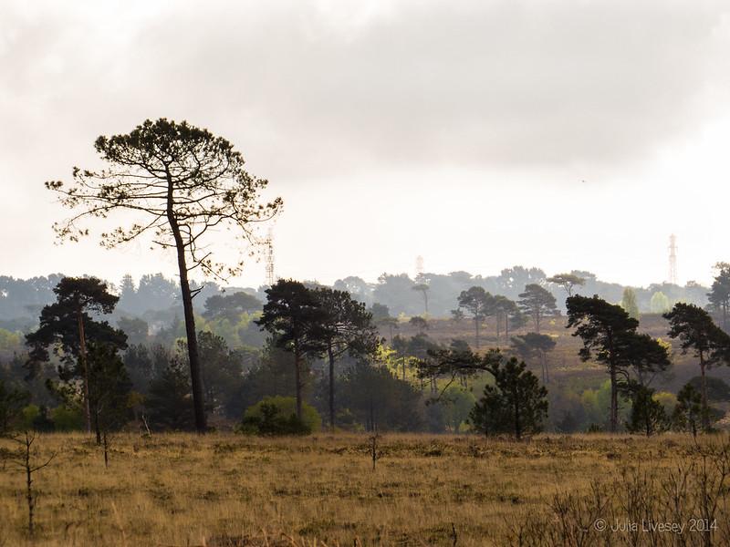 Vista across Canford Heath
