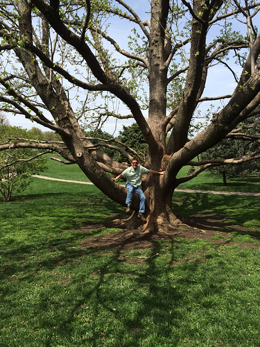 Whats the best yellow flowering magnolia powell gardens kansas heres a picture of me in a cucumbertree magnolia acuminata in loose park cucumbertrees become huge trees at maturity and have greenish yellow flowers mightylinksfo Gallery