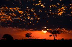 Outback glory