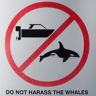 Do not harass the whales