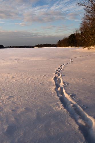 trees sunset lake snow ice forest pond woods unitedstates massachusetts olympus fells 12mm middlesex animaltracks stoneham spotpond em5 middlesexfellsstatereservation