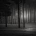 Black Woods by Vesa Pihanurmi