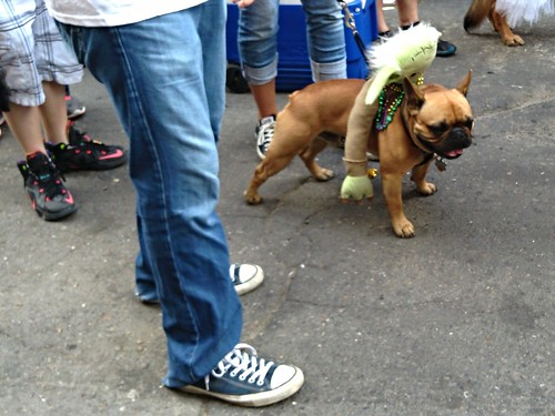 Bark Wars