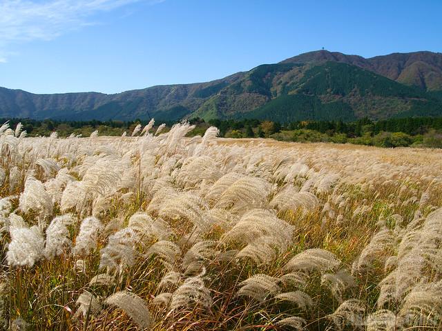 雄大な仙石原のススキの草原 (The field of silver grasses at Sengokuhara)