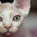 Tonk Eyes by peter_hasselbom